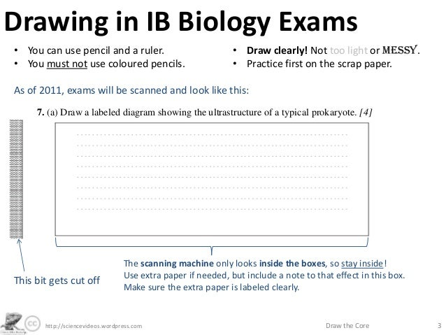 how to draw a scale bar for biological drawings