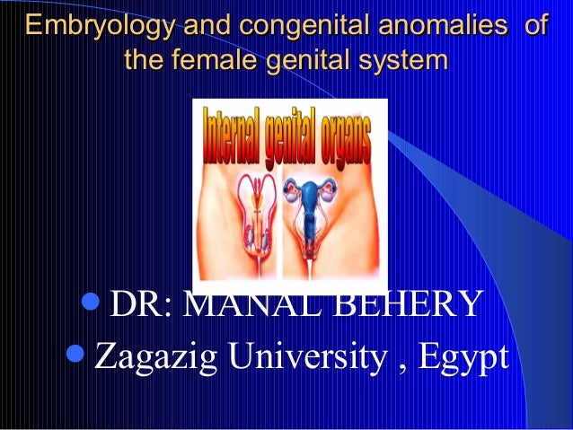 Embryology and congenital anomalies of      the female genital system             DR   DR: MANAL BEHERY  Zagazig Univer...