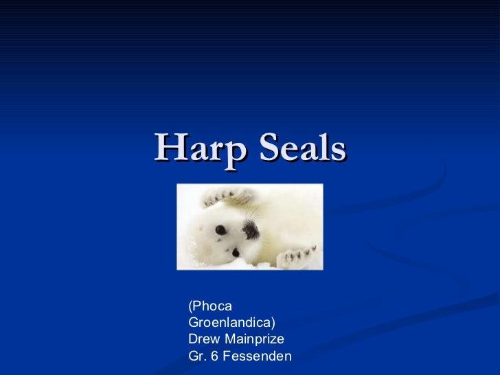 Harp Seals (Phoca Groenlandica) Drew Mainprize Gr. 6 Fessenden