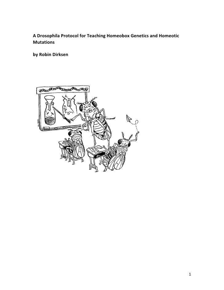 A Drosophila Protocol for Teaching Homeobox Genetics and Homeotic Mutations  by Robin Dirksen                             ...