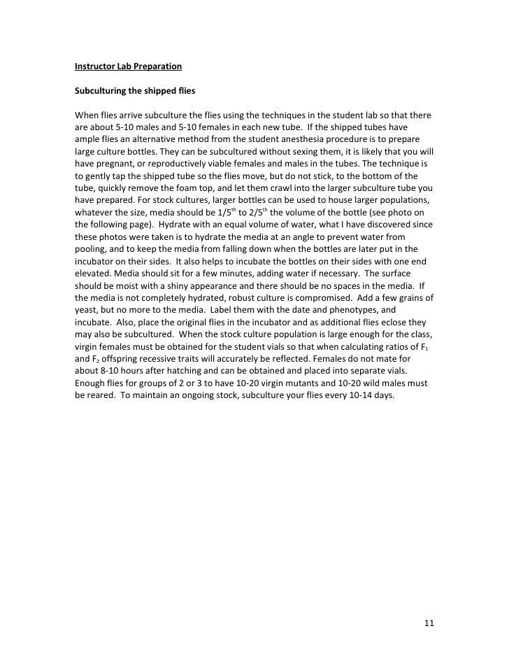drosophila lab report