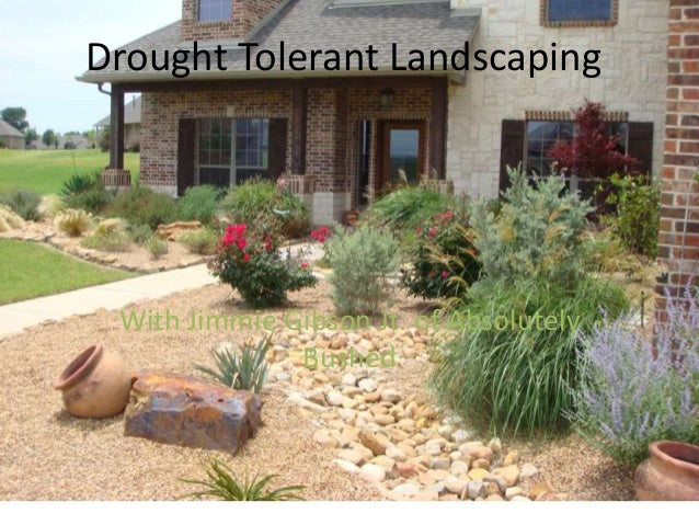 Drought tolerant education absolutely bushed landscaping for Drought resistant landscaping