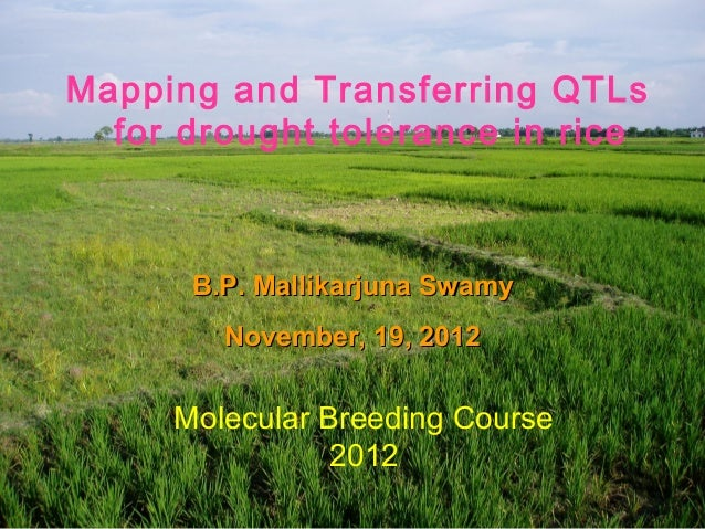 Mapping and Transferring QTLs  for drought tolerance in rice      B.P. Mallikarjuna Swamy        November, 19, 2012     Mo...