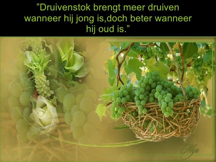 La planta de uva