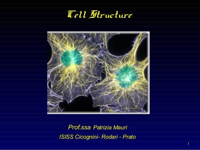1 Cell Structure Prof.ssa Patrizia Mauri ISISS Cicognini- Rodari - Prato