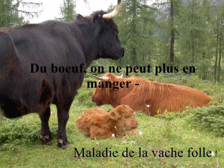 Du boeuf, on ne peut plus en manger - Maladie de la vache folle  !