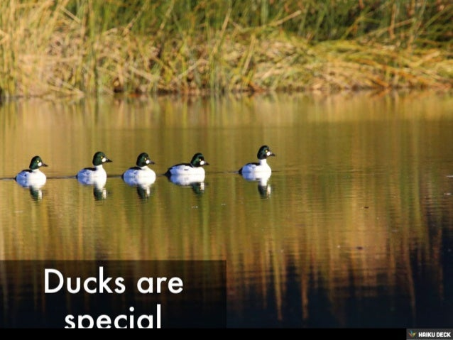 Ducks are special