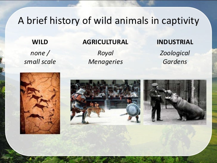 the necessity of animal captivity essay Trending topics regarding restricting animals to a whole life in a zoo have always been a controversial issue how to write a persuasive essay about it.