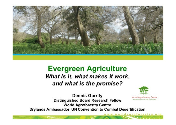 Evergreen Agriculture        What is it, what makes it work,         and what is the promise?                      Dennis ...