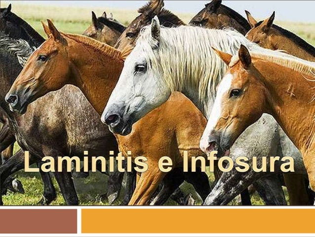 Laminitis e Infosura.   Laminitis.    Infosura.