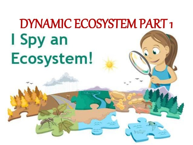 biology dynamic ecosystem Ap biology lab 10: energy dynamics purpose: what factors govern energy capture, allocation, storage, and transfer between producers and consumers in a terrestrial ecosystem background: almost all life on this planet is powered, either directly or indirectly, by sunlight.