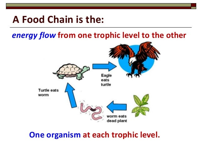 Draw A Food Chain With Four Organisms