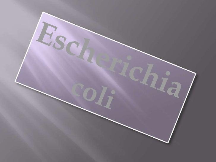 Escherichia coli (E. coli)   Se encuentra en el intestino de animales y aguas negras.   Fue descubierta en 1885 por Theodo...