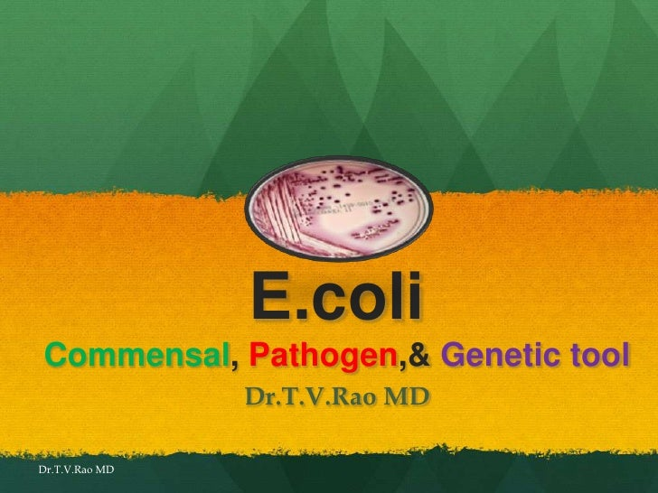 E.coli infections