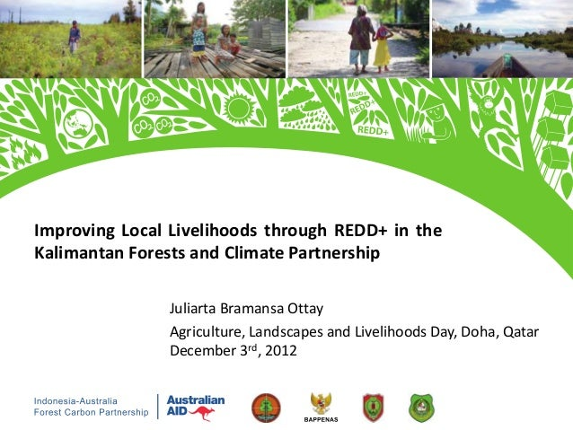 Improving local livelihoods through REDD+ in the Kalimantan forests and climate partnership