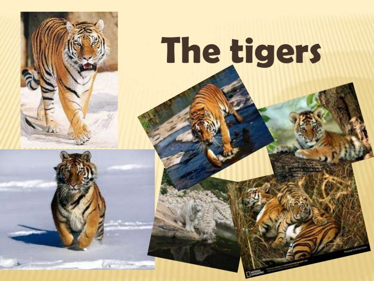 The tigers<br />