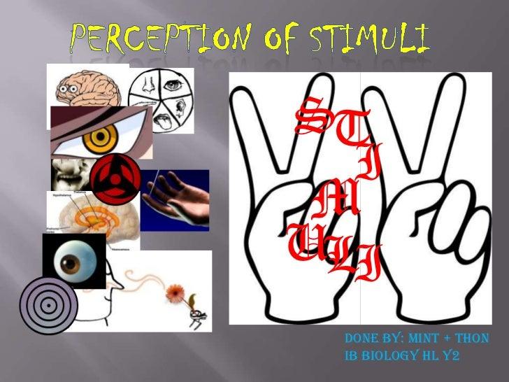 E2 perception of stimuli
