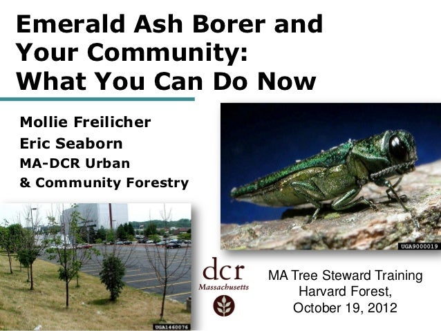 Emerald Ash Borer andYour Community:What You Can Do NowMollie FreilicherEric SeabornMA-DCR Urban& Community Forestry      ...