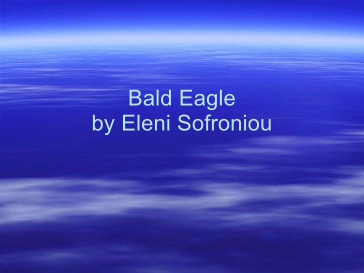 Bald Eagle by Eleni Sofroniou