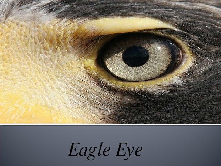 Eagle Eye Safe City