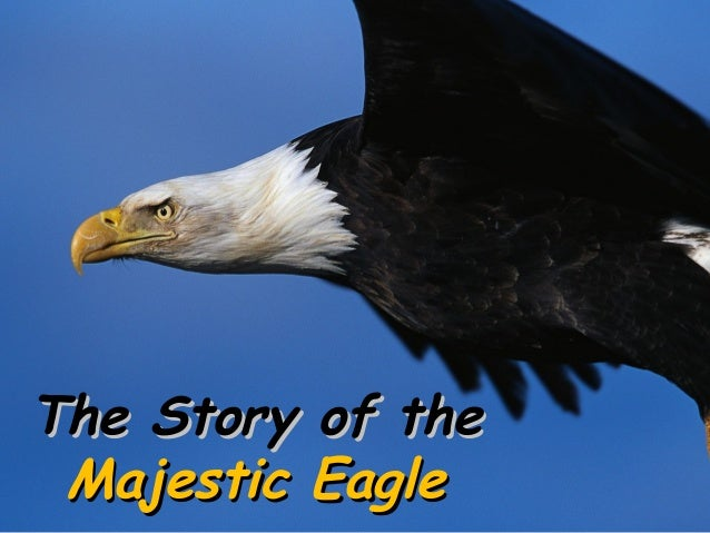 The Story of the Majestic Eagle