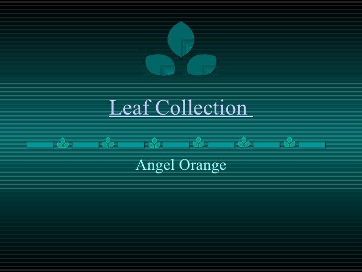 Leaf Collection  Angel Orange