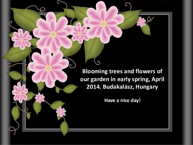 Blooming trees and flowers of our garden in early spring, April 2014. Budakalász, Hungary Have a nice day!