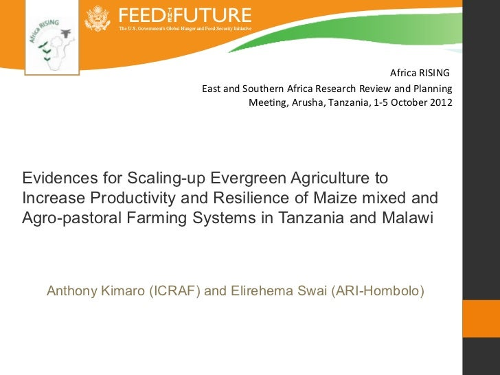 Evidence for scaling-up evergreen agriculture to increase productivity and resilience of maize mixed and agro-pastoral farming systems in Tanzania and Malawi