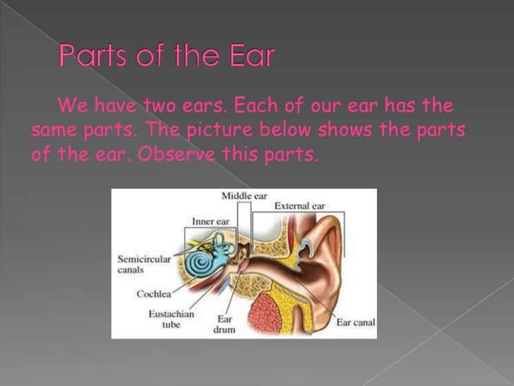 Ear parts and its function