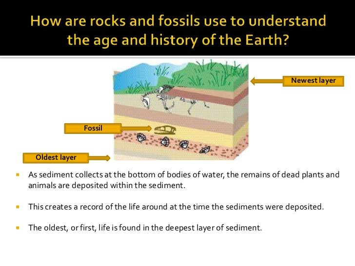 do fossil finds contradict the bible Does the theory of evolution contradict the bible do evolutionary theory and scripture contradict each fossils in the same layers as we find whale fossils.