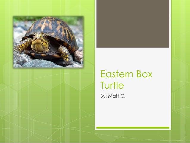 Eastern BoxTurtleBy: Matt C.