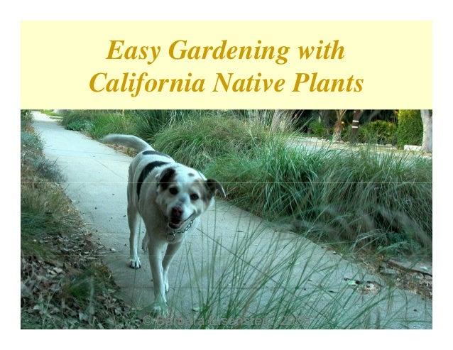 Easy Gardening withCalifornia Native Plants    © Barbara Eisenstein, 2009    © Barbara Eisenstein, 2009