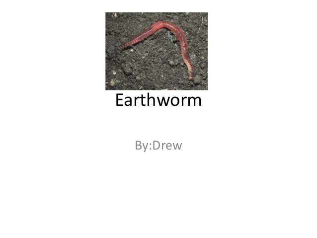 Eathwormdrew