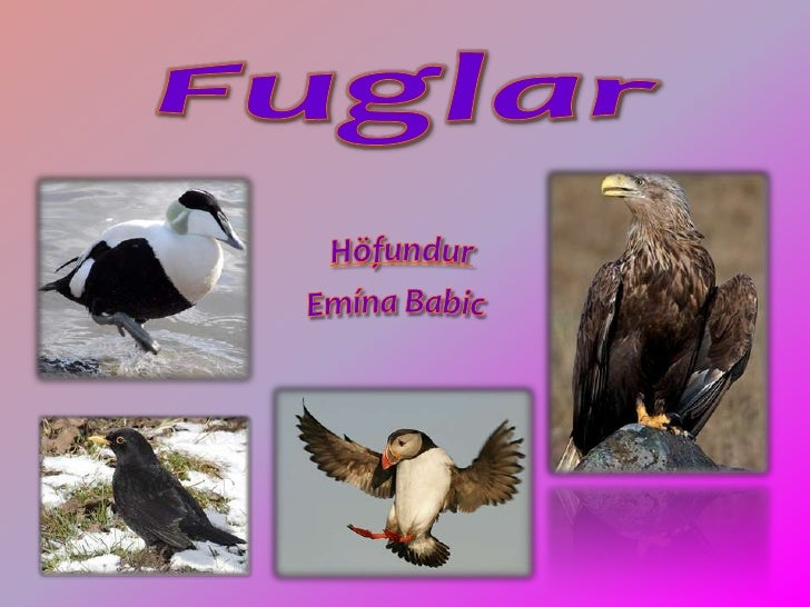 Fuglar<br />Höfundur<br />Emína Babic<br />