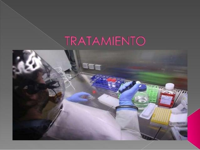  Entre humanos, el virus se propaga por contacto estrecho con la sangre, secreciones, órganos u otros líquidos corporales...