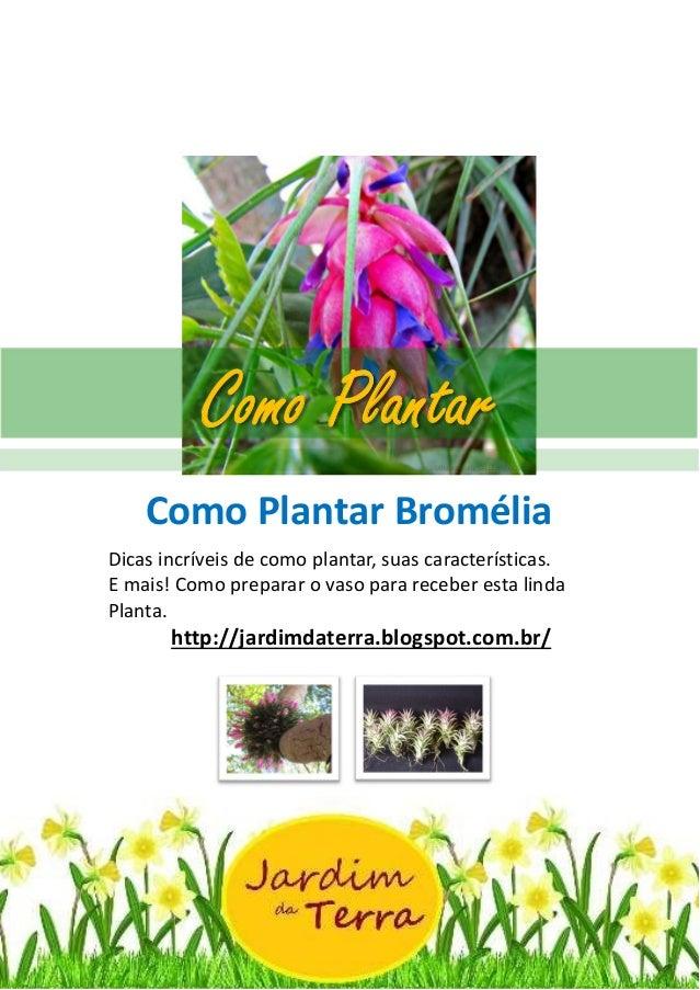 Como Plantar BROMÉLIA http://jardimdaterra.blogspot.com.br/ Como Plantar Bromélia Dicas incríveis de como plantar, suas ca...