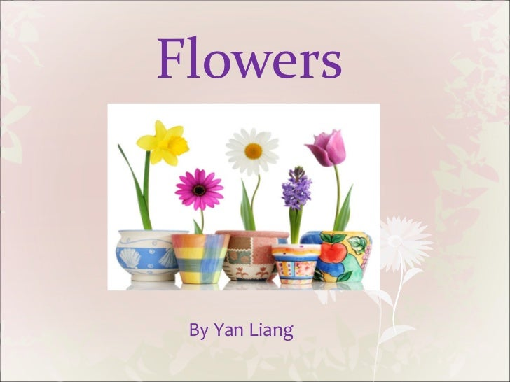 Flowers By Yan Liang