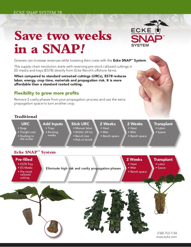 ecke snap system 78Save two weeksin a SNAP!Growers can increase revenues while lowering their costs with the Ecke SNAP™ Sy...