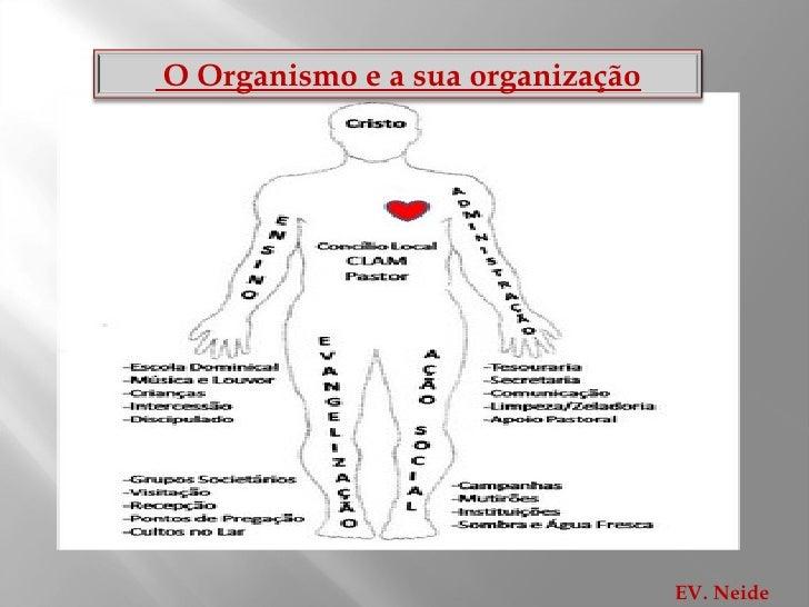 EV. Neide O Organismo e a sua organização