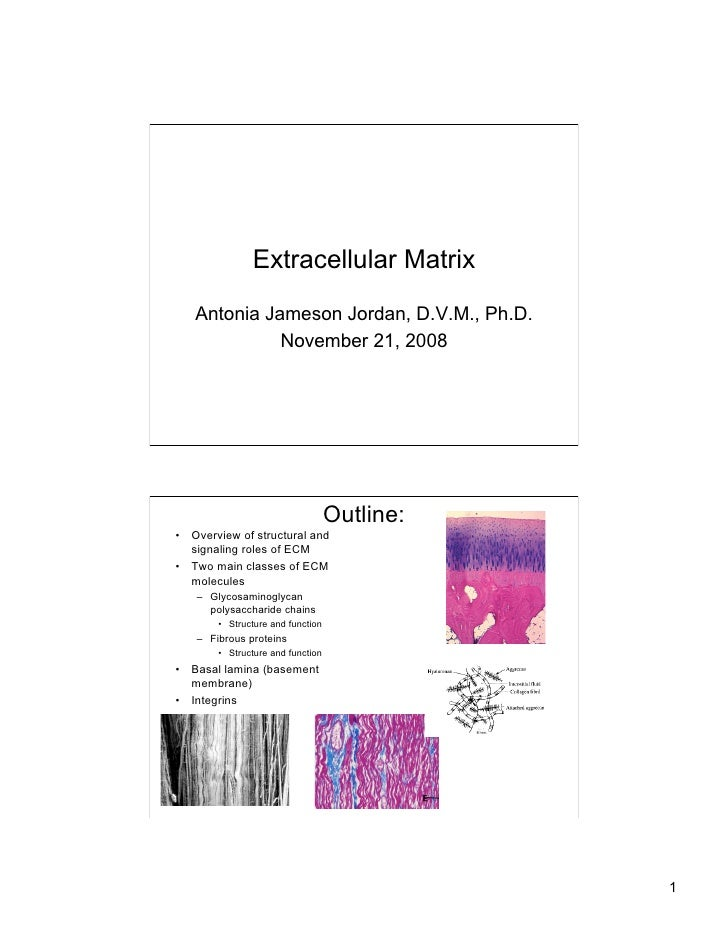 Extracellular Matrix    Antonia Jameson Jordan, D.V.M., Ph.D.              November 21, 2008                              ...