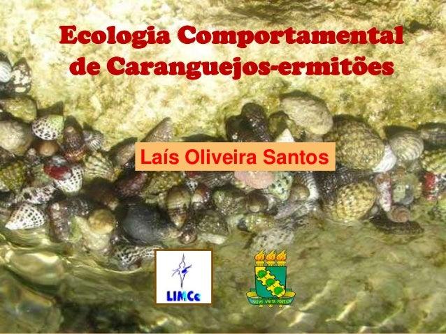 Ecologia Comportamental   de Caranguejos-ermitões         Laís Oliveira SantosECOLOGIA COMPORTAMENTAL DECARANGUEJOS-ERMITÕES