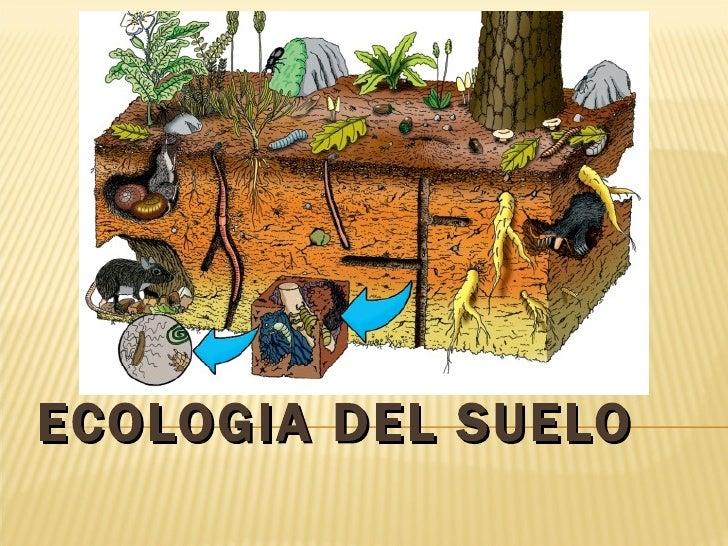 Ecolog a de suelos for Como esta constituido el suelo