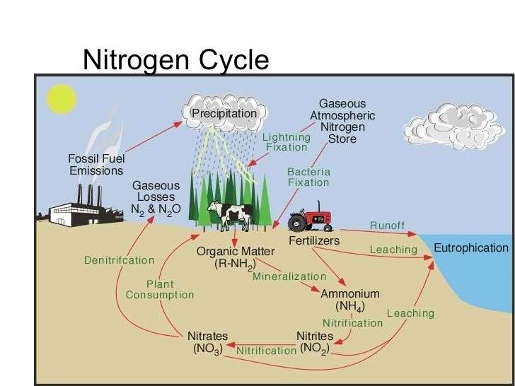 ecological cycles flow diagram of acid rain flow diagram of acid rain