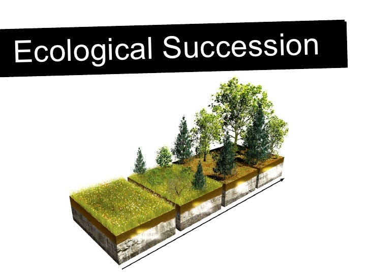 Is Ecological Succession Natural Process Or Influenced By Humans
