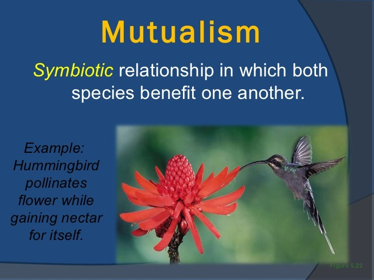 the idea of mutualism between animals Mutualism, association between organisms of two different species in which each benefits mutualistic arrangements are most likely to develop between organisms with widely different living requirements.
