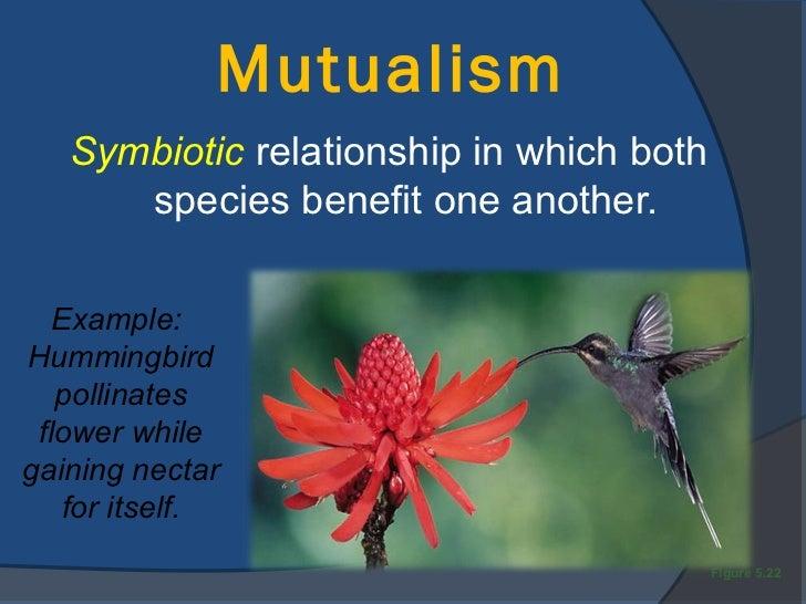 rainforest predators and prey relationship