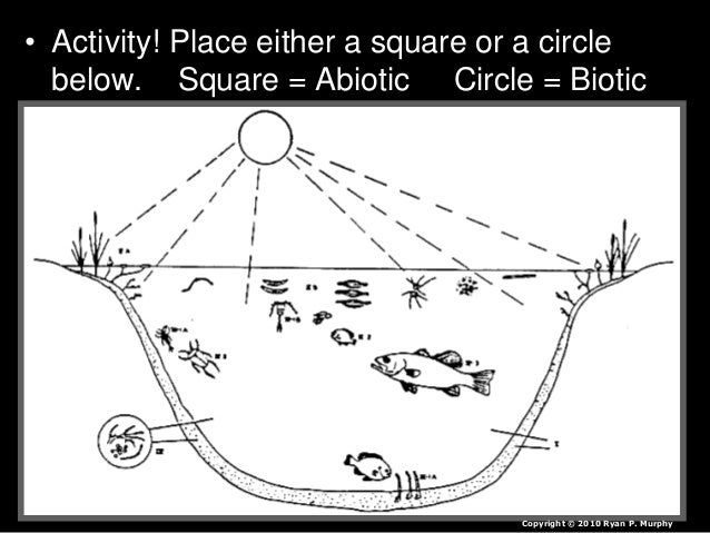Ecology Abiotic Factors, Light, Animals and Plants Lesson PowerPoint