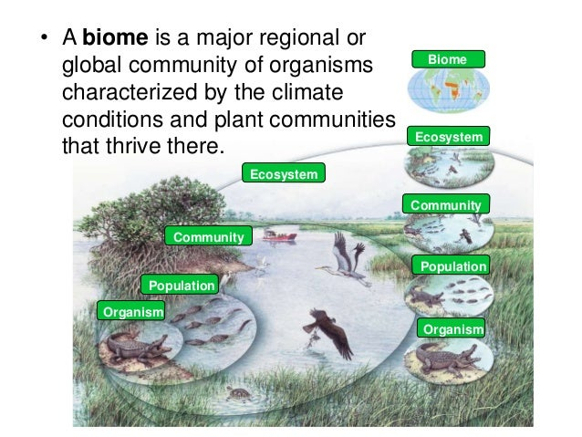 biology notes ecology and eco systems Ecosystems & energy flow (41-42) ib diploma biology 2  mesocosms • small , closed-off experimental systems set up as ecological experiments • can be   bioknowledgy dp notes 72 transcription and gene expression.
