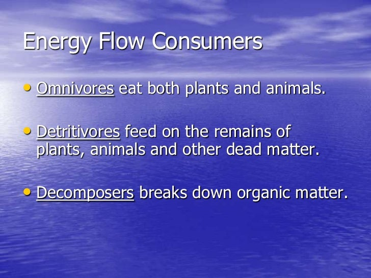 Energy flow consumers br omnivores eat both plants and animals