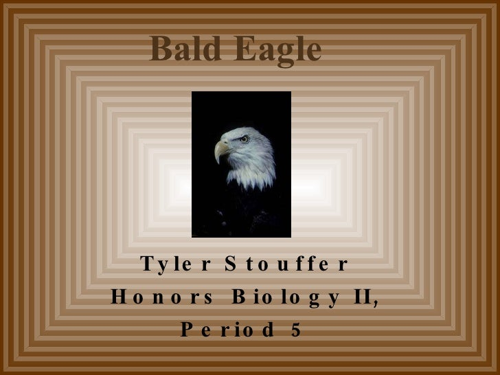 Tyler Stouffer Honors Biology II, Period 5 Bald Eagle